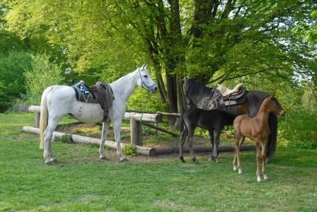 Pferderastplatz auf dem Christenberg
